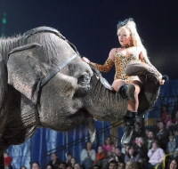 elephants - circus - cookeville - tn